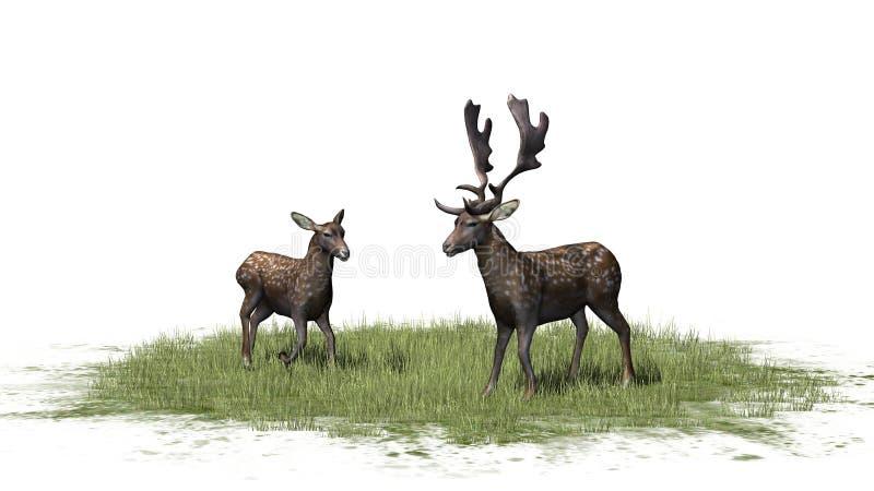 Um par bonito de cervos na grama ilustração royalty free