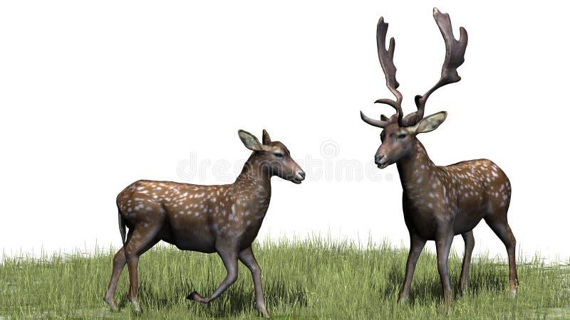 Um par bonito de cervos na grama ilustração do vetor
