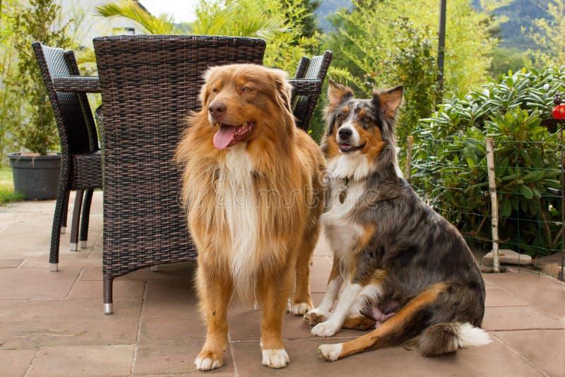 Um par cães bonitos fotografia de stock royalty free