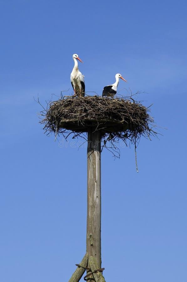 Um par cegonhas no ninho no céu azul imagens de stock royalty free