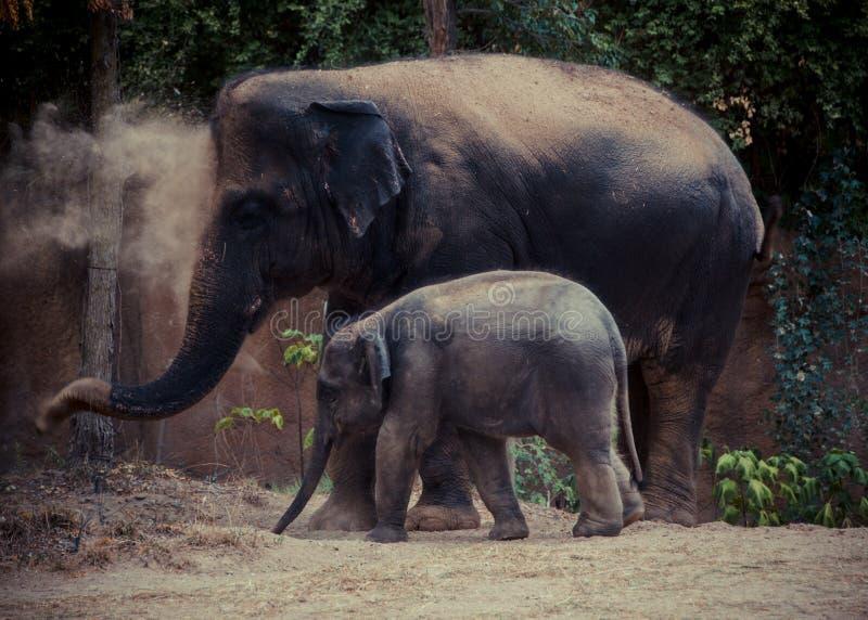 Um par de elefantes imagens de stock