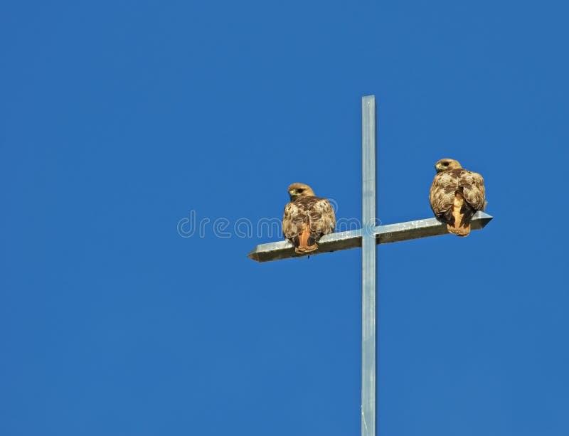 Um par de falcões da Vermelho-cauda empoleira-se em uma cruz imagens de stock royalty free