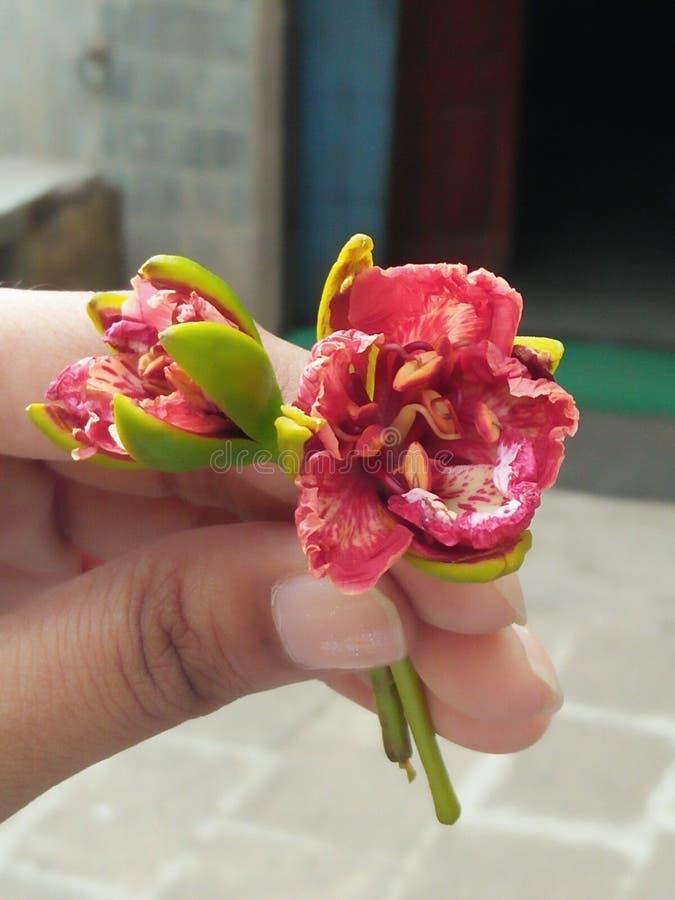 Um par de flor vermelha e branca guarda à disposição fotografia de stock royalty free