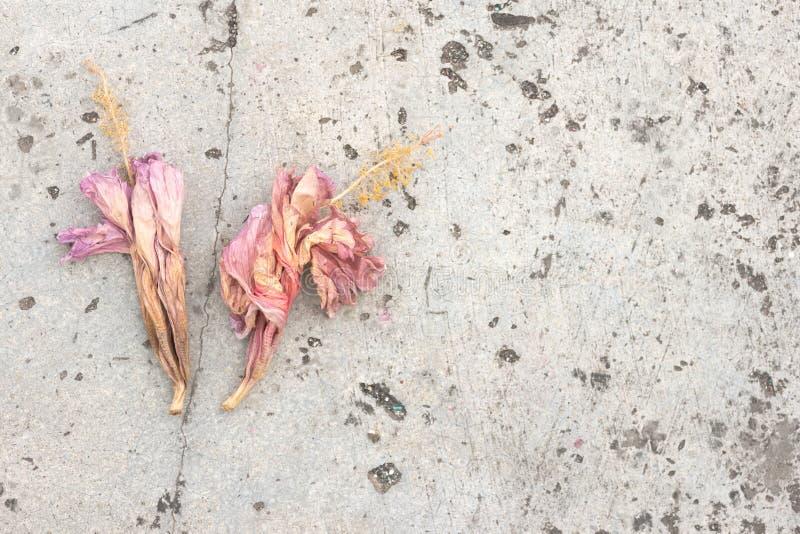 Um par de flores cor-de-rosa caídas tingidas imagens de stock royalty free