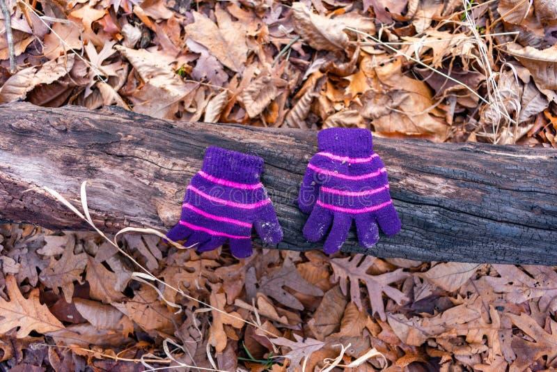 Um par de luvas do inverno de uma criança em um início de uma sessão a floresta durante o inverno fotografia de stock