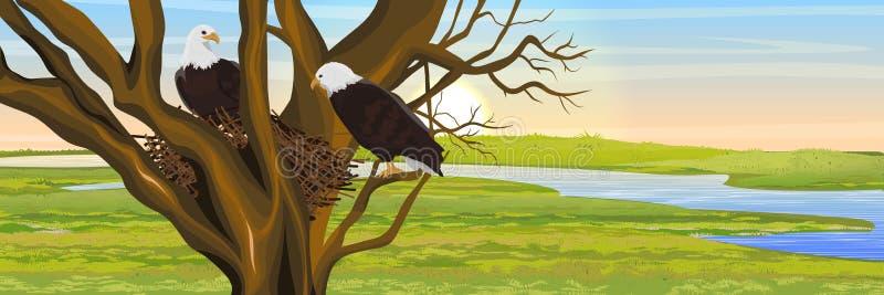 Um par de pássaros da águia americana em um ninho dos ramos River Valley ilustração stock