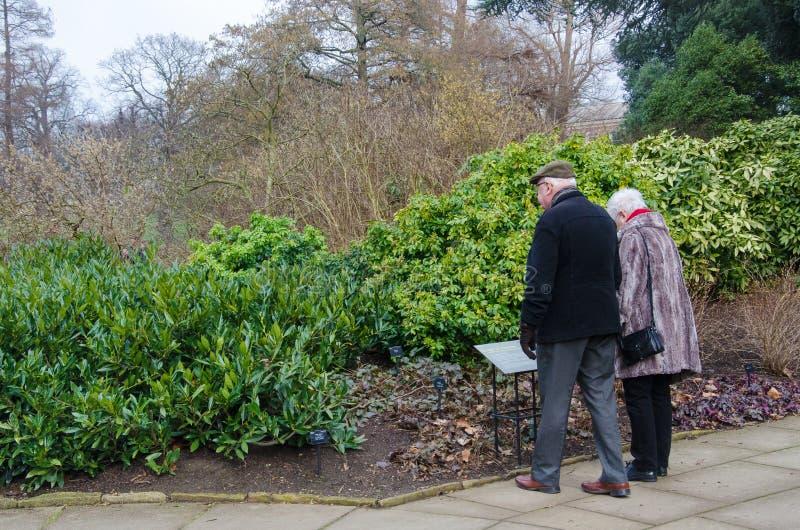 Um par idoso no jardim de Kew foto de stock