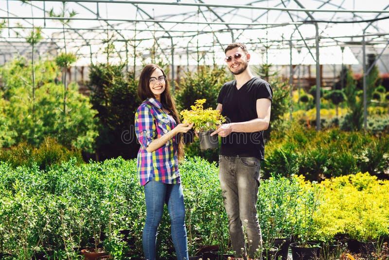 Um par novo, um menino em um t-shirt preto e uma menina nos vidros, mantêm um potenciômetro com uma planta verde Compra em uma es imagens de stock