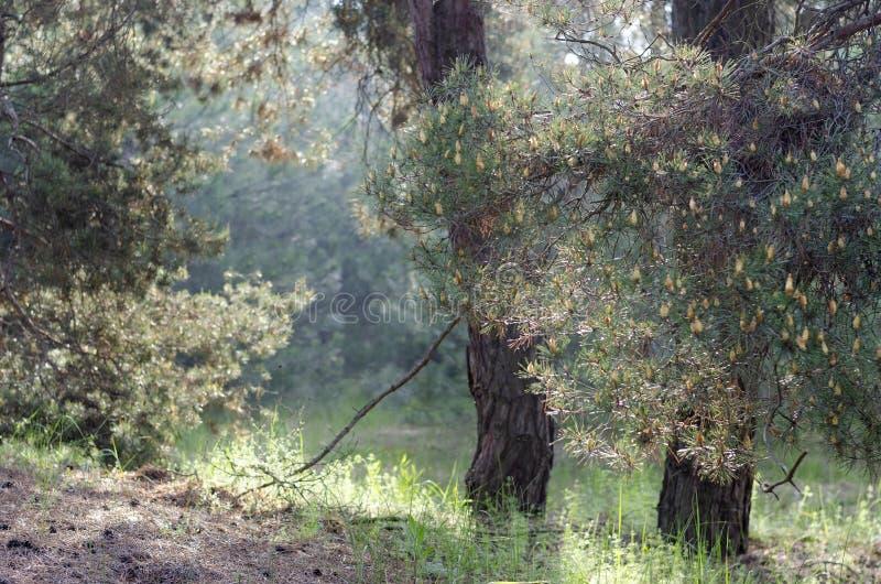Um parque da caminhada na primavera fotografia de stock royalty free