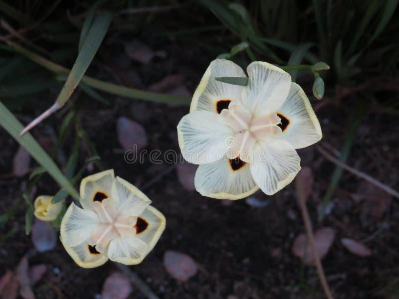 Um particular ilumina - a flor amarela foto de stock
