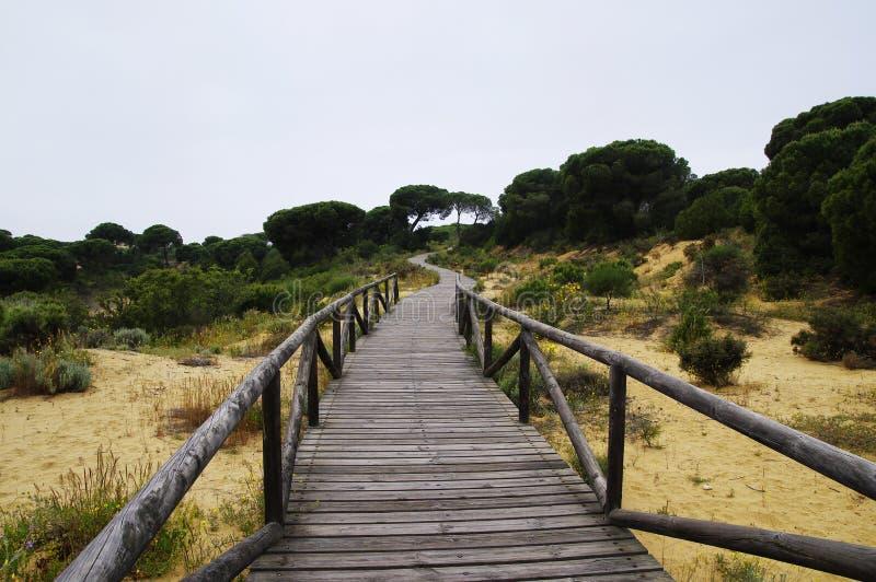 Um passeio à beira mar de madeira de enrolamento através das dunas perto de Matalascanas, província Huelva imagens de stock