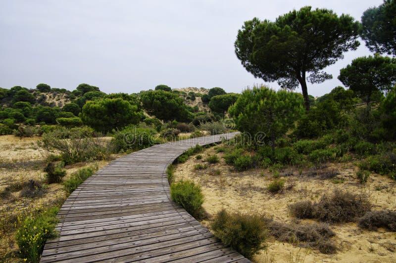 Um passeio à beira mar de madeira de enrolamento através das dunas perto de Matalascanas, província Huelva imagem de stock
