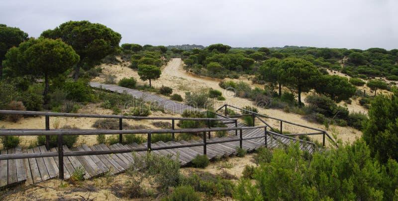 Um passeio à beira mar de madeira de enrolamento através das dunas perto de Matalascanas, província Huelva fotos de stock