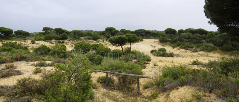 Um passeio à beira mar de madeira de enrolamento através das dunas perto de Matalascanas, província Huelva imagens de stock royalty free