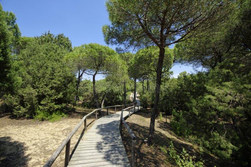 Um passeio ? beira mar de madeira atrav?s das dunas que conduzem ? praia do EL Portil, Huelva, a Andaluzia, Espanha imagens de stock