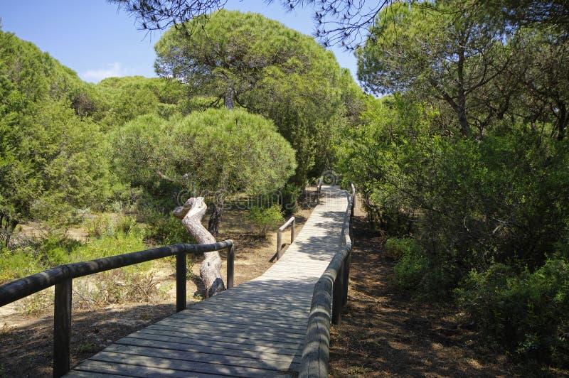 Um passeio ? beira mar de madeira atrav?s das dunas que conduzem ? praia do EL Portil, Huelva, a Andaluzia, Espanha fotografia de stock royalty free