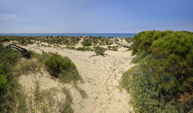Um passeio ? beira mar de madeira atrav?s das dunas que conduzem ? praia do EL Portil, Huelva, a Andaluzia, Espanha fotos de stock royalty free