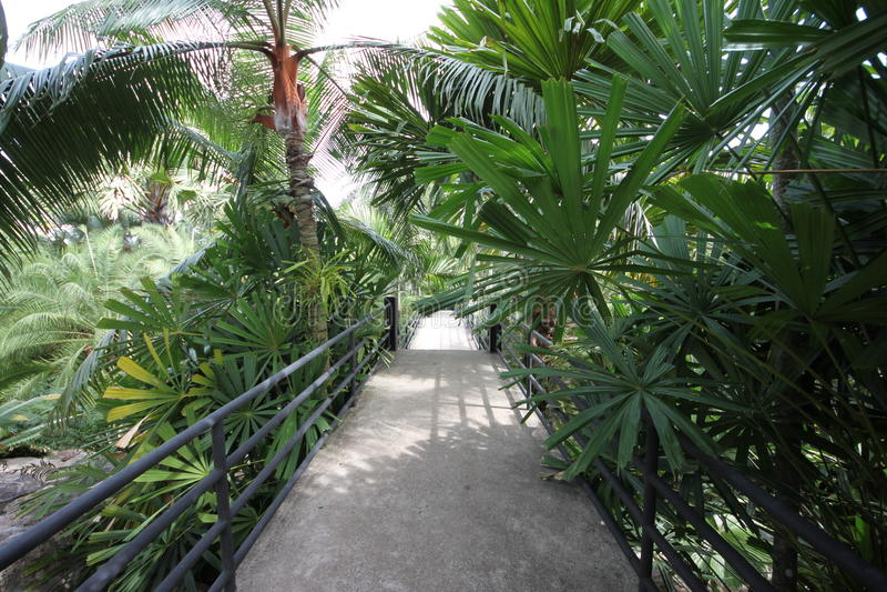 Um passeio com uns trilhos em uma floresta tropical com planta e as árvores no jardim botânico tropical de Nong Nooch perto da ci foto de stock