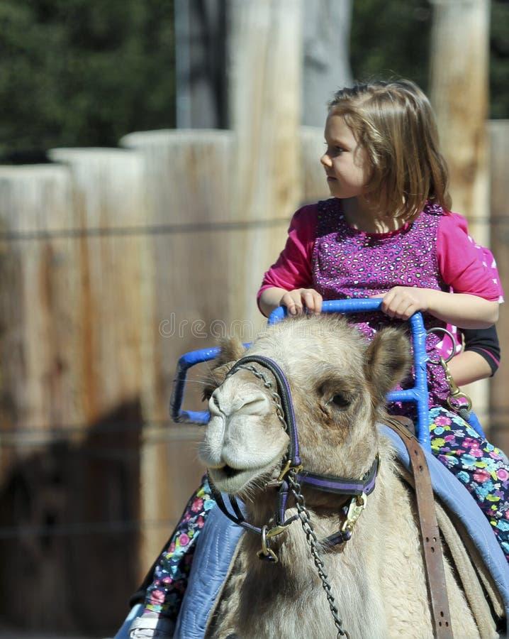 Um passeio do camelo em Reid Park Zoo imagem de stock