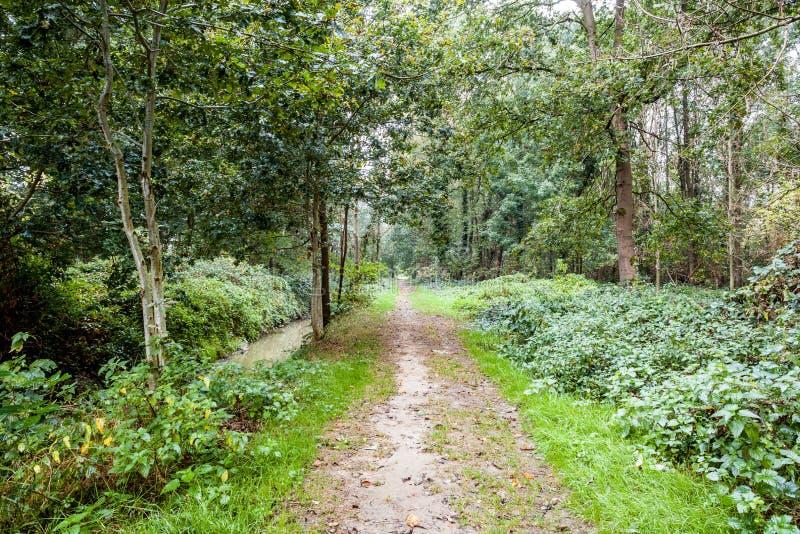 Um passeio na floresta foto de stock