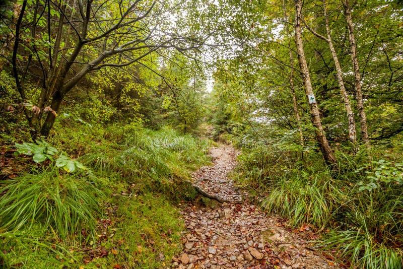 Um passeio na floresta imagem de stock royalty free