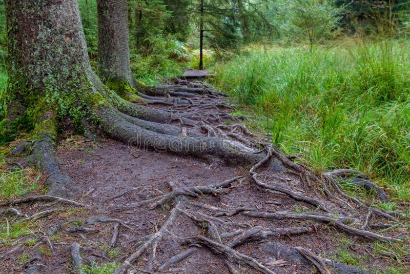 Um passeio na floresta fotografia de stock royalty free