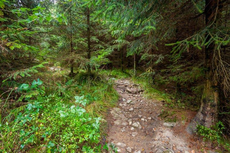Um passeio na floresta fotos de stock
