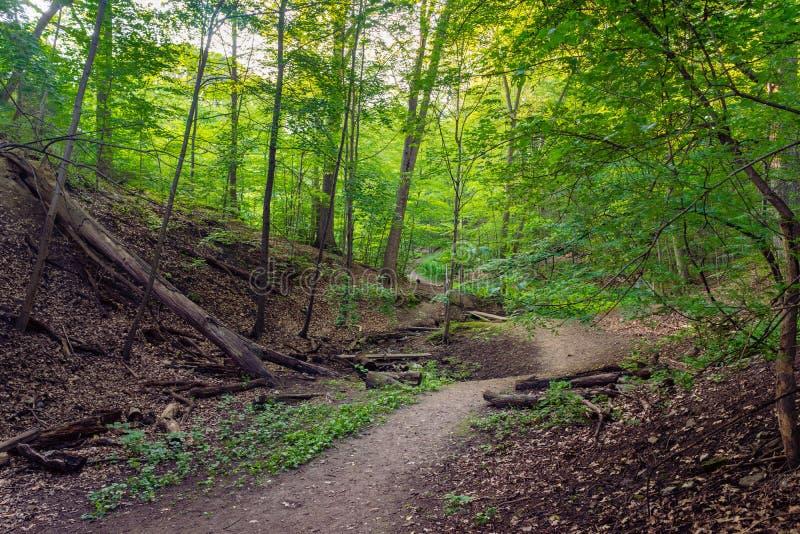 Um passeio natural conduz através de uma floresta fotografia de stock