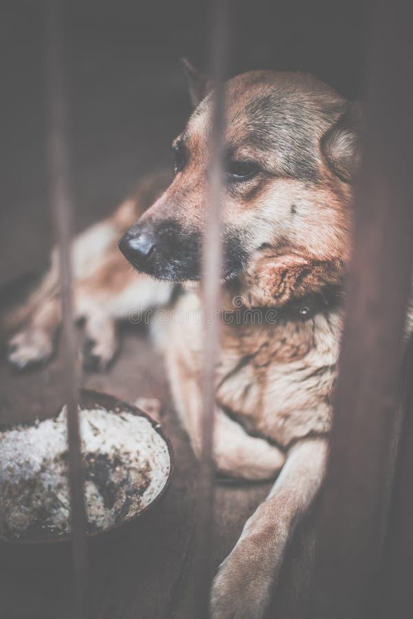 Um pastor triste grande em um aviário velho Tonificado, foto do estilo imagens de stock royalty free