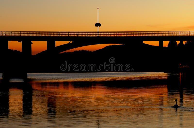 Um pato que nada no rio no por do sol fotografia de stock