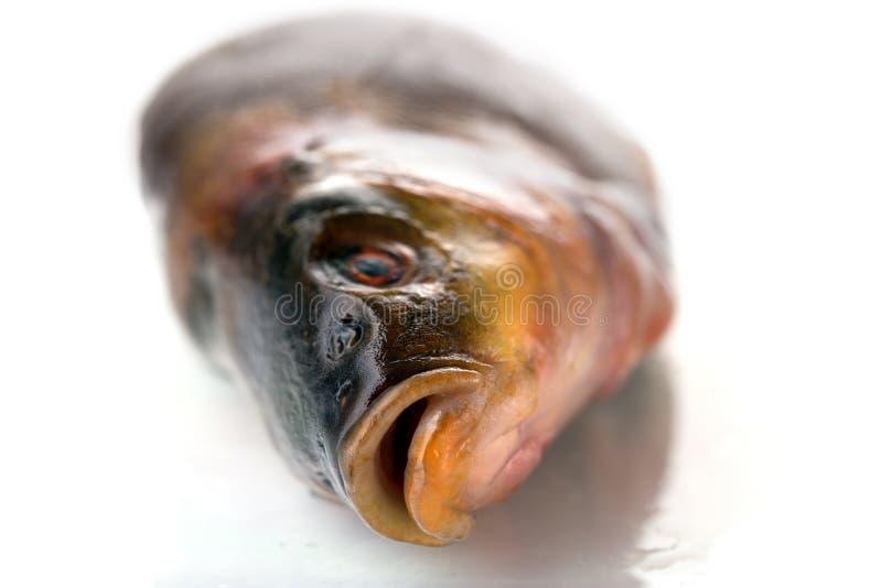 Um peixe cru fresco em um fundo branco imagens de stock royalty free