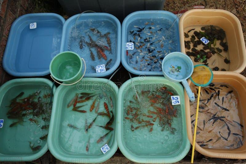 Um peixe do aquário para a venda no mercado imagem de stock