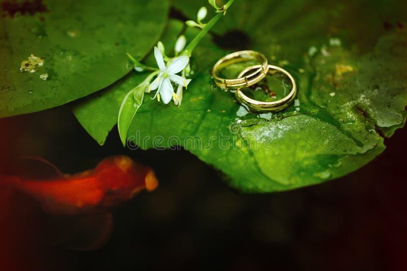 Um peixe dourado nada em torno de uma folha de um lírio de água com as alianças de casamento que encontram-se nele fotografia de stock royalty free