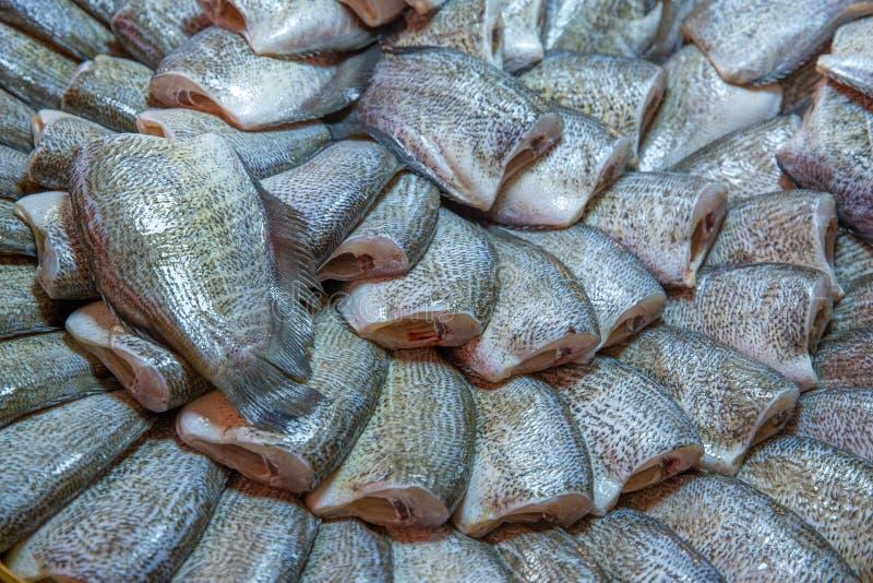 Um peixe ensolarado, gurami da pele de serpente, foco seletivo imagens de stock royalty free