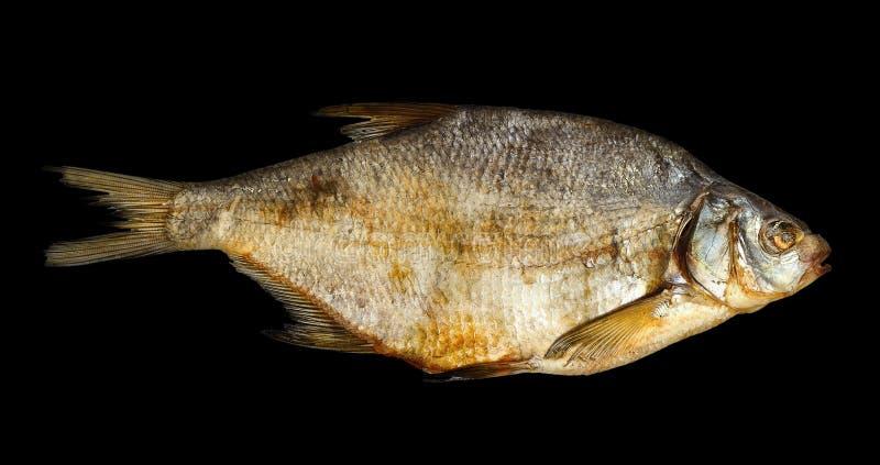Um peixe secado foto de stock royalty free
