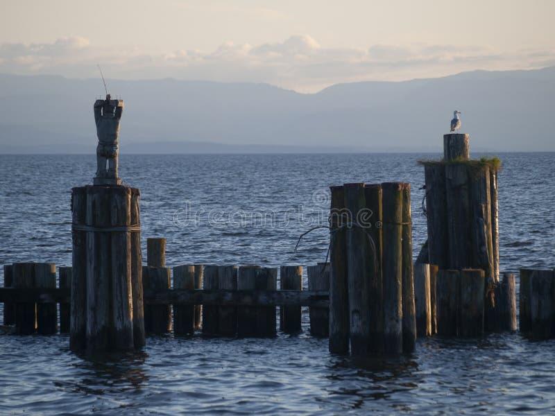 Um pescador de madeira e um relógio Davis Bay da gaivota para o jantar imagem de stock royalty free