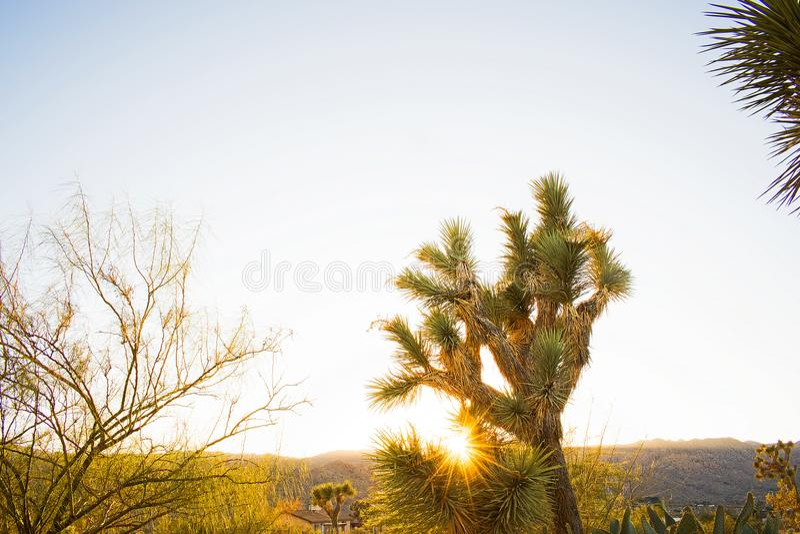Um por do sol do deserto - Joshua Tree fotografia de stock royalty free