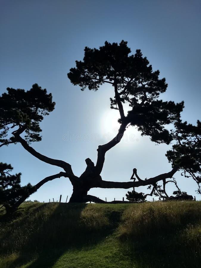 Um por do sol do monte da árvore imagens de stock royalty free