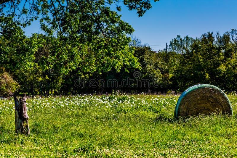 Um prado com Hay Bales redondo e Texas Wildflowers fresco imagem de stock royalty free