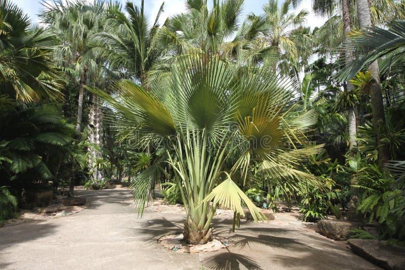 Um prado com planta tropical e grama e árvores e pedras e estátua no jardim botânico tropical de Nong Nooch perto da cidade de Pa imagens de stock royalty free