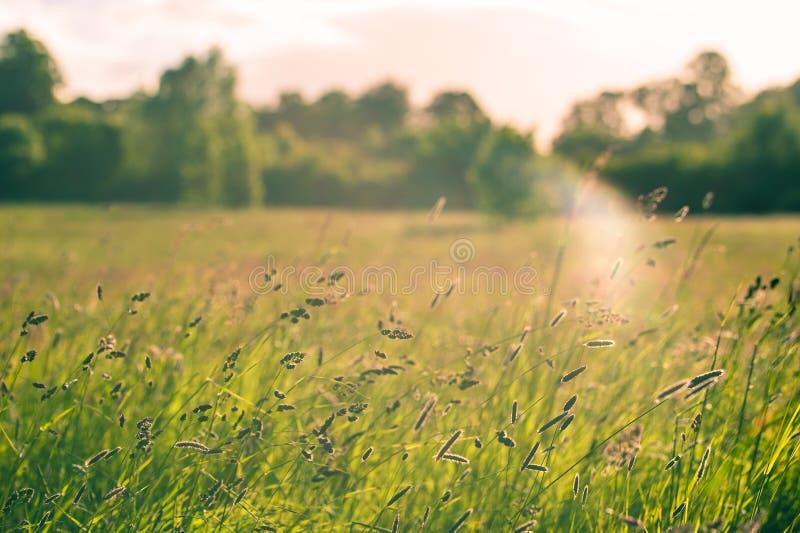 Um prado com plantas selvagens iluminou-se pela luz do por do sol Copie o espaço imagem de stock royalty free