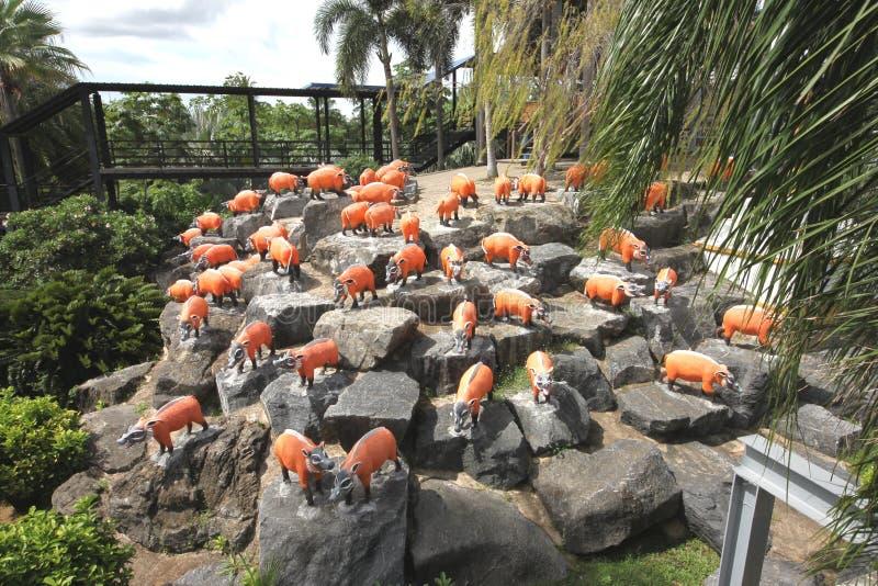 Um prado com porcos e grama e árvores e pedras vermelhos no jardim botânico tropical de Nong Nooch perto da cidade de Pattaya em  fotografia de stock royalty free