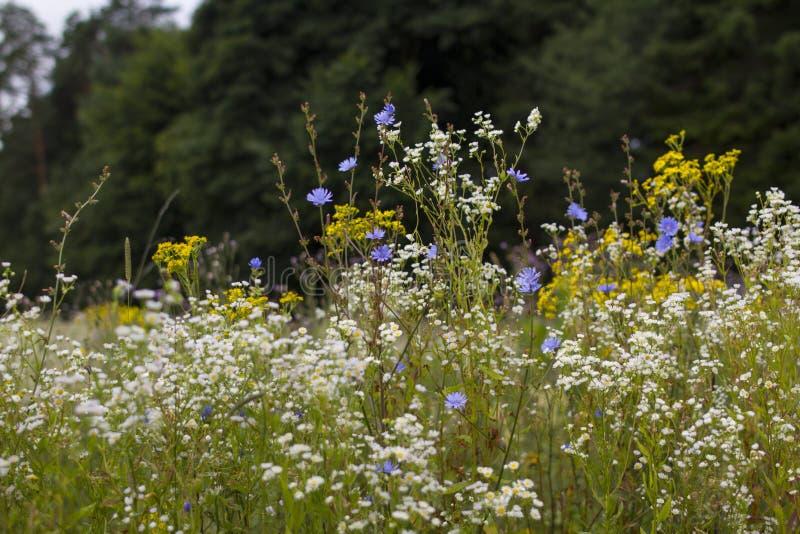 Um prado completamente das flores, ao lado de uma floresta fotos de stock