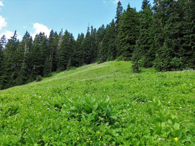 Um prado do wildflower nas montanhas nortes da cascata imagem de stock royalty free