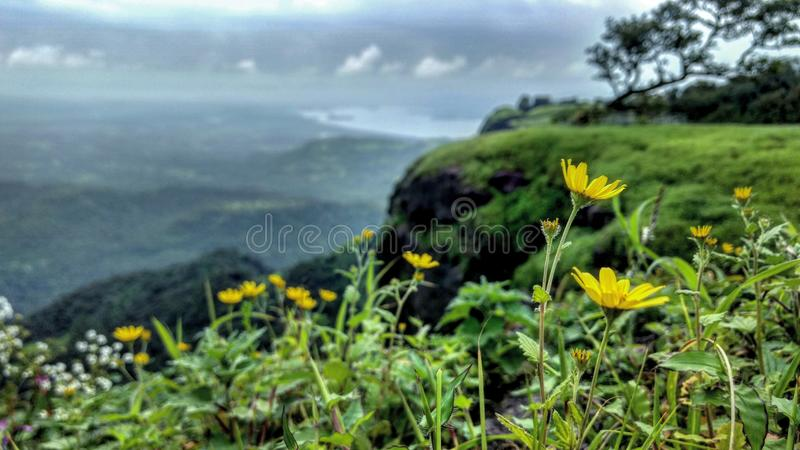 Um prado florido imagem de stock royalty free