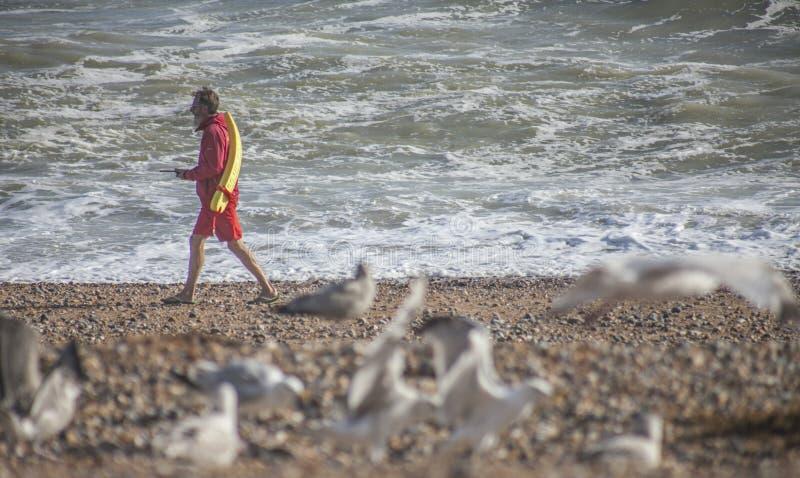 Um protetor do mar na praia imagens de stock royalty free