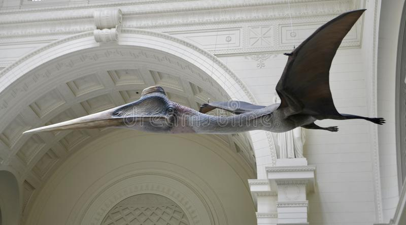 Um Pterosaur fotos de stock royalty free