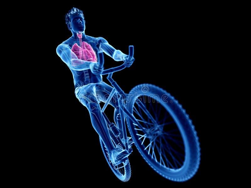 um pulmão dos ciclistas ilustração stock