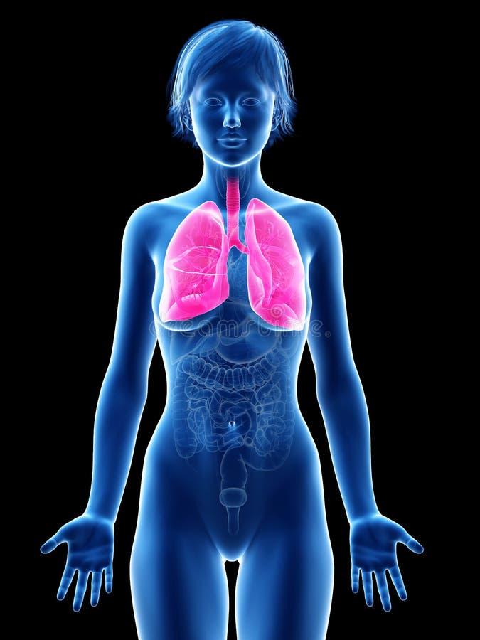 Um pulmão dos femaleilustração do vetor