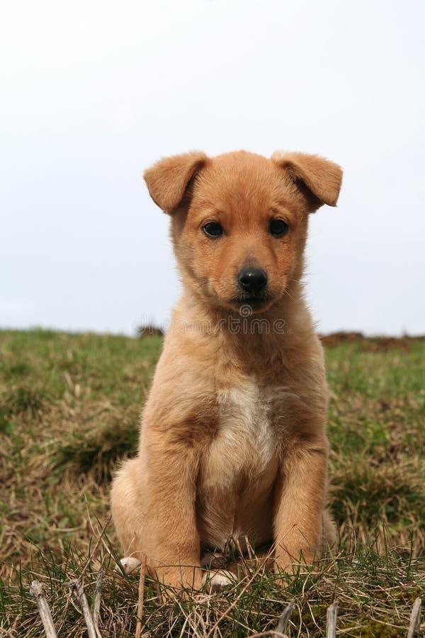 Um puppie do doggy fotos de stock royalty free